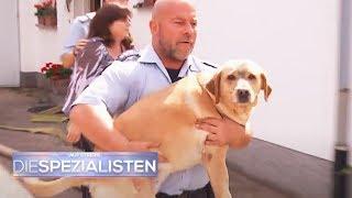 Der Hund ist sicher - Wo ist das Frauchen? | Auf Streife - Die Spezialisten | SAT.1 TV