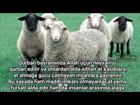Qurban Bayrami  tebrik  mesaji 2018