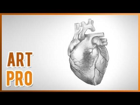 Как нарисовать человеческое сердце карандашом