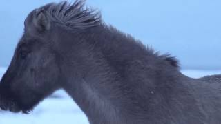 PARAJUMPERS STORIES - LAXNES HORSE FARM - TEASER