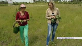 Сибирские травы от всех болезней (Енисей Минусинск)