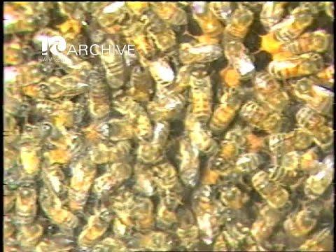 WAVY Archive: 1981 Newport News Bee Keeper