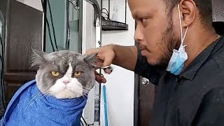Grumpy Cat Not Happy About Having His Hair Cut