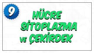 9.Sınıf Biyoloji 2.Dönem Giriş   Hücre, Sitoplazma Ve Çekirdek