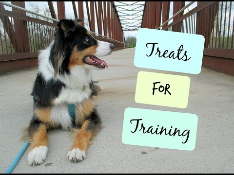 Training Treats that I Recommend |Life With Aspen|