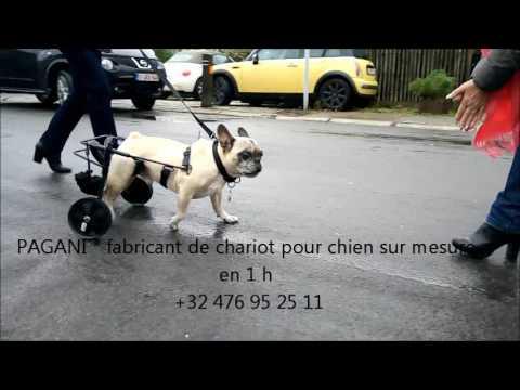 chariot sur mesure pour chien handicape youtube. Black Bedroom Furniture Sets. Home Design Ideas