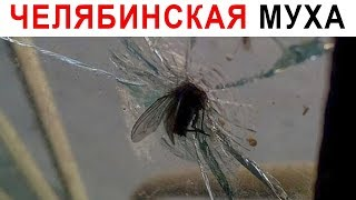 Лютые приколы. Супер муха
