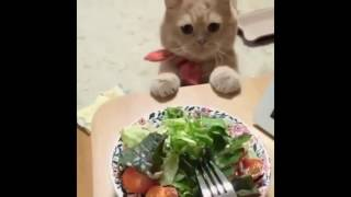 Мой голодный кот.