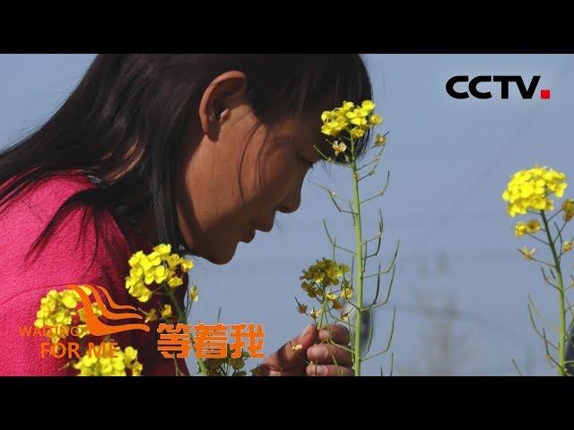 [等着我 第五季] 中国好丈夫为妻解心结 一起寻找她心中那片油菜花! | CCTV