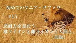 2回目のゲーム・ドライブでライオンの群れを発見。さすがブラウンさん。...