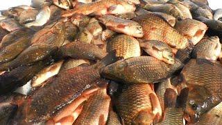 ПОПАЛИ НА СУМАСШЕДШИЙ ЖОР рыбалка на карася весной 2021 поплавок и кивок