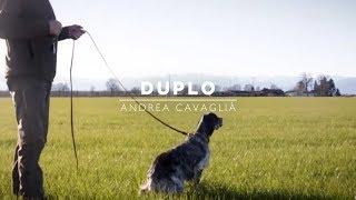 DUPLO | Setter Inglese figlio di Lupin dello Zorino