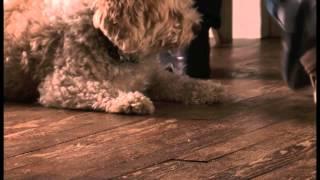 6 Rules For Good Dog Behavior