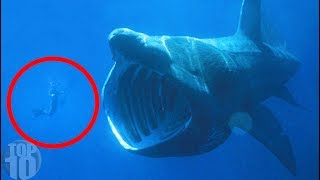 Did They Find a Megalodon In the Mariana Trench?