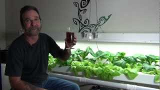 Hydroponic Greenhouse Project, Indoor Nft Pac Choy And Lettuce For Winter Eats!