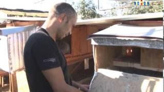 Кроличья ферма(Бизнес на ушах. Житель села Поповка на своем приусадебном участке открыл кроличью ферму. Это стало возможны..., 2013-08-29T16:00:46.000Z)
