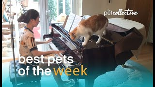 This Cat Hates Piano Practice | Best Pets of the Week