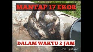 Download Video UMPAN JUMPUT (UMPAN dadakan untuk LOMBA) MP3 3GP MP4