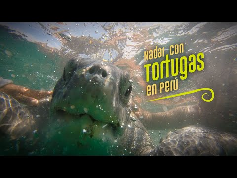 Nadar Con Tortugas Marinas En Máncora, #Perú