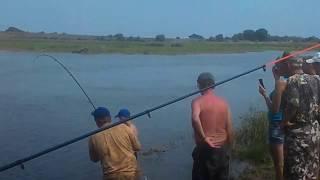 Обычная рыбалка на обычного сома 50кг Десна