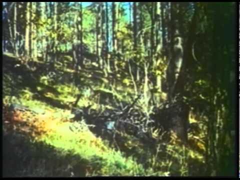 LASSIE'S GREAT ADVENTURE 1963  Full Movie  Captioned