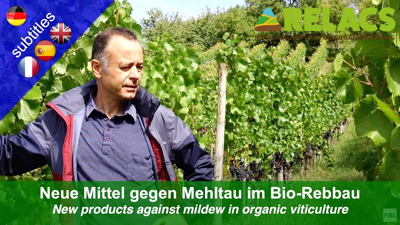 Download Neue Pflanzenschutzmittel gegen Echten und Falschen Mehltau im Bio-Weinbau - Praxisbericht
