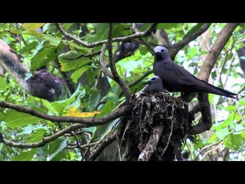 Bringing Back the Birds in the British Indian Ocean Territory