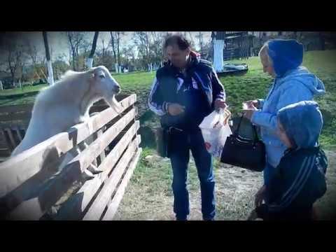Иван Подбицкий: Кормим козла