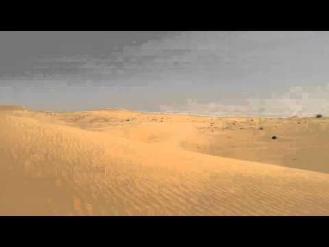 Desert Wildlife drive at Dubai Desert Conservation Reserve