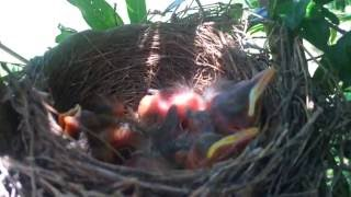 Baby Birds Hatched. Awesome!!!