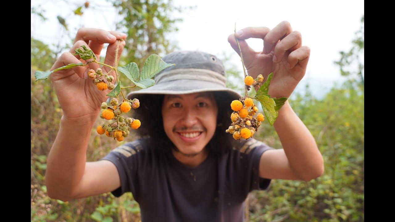 ผลไม้ป่ารสเลิศ..!!  Ep.7  เบอรี่สีส้ม..!! หนามไข่กุ้งหวานฉ่ำ..!! [โจโฉ]