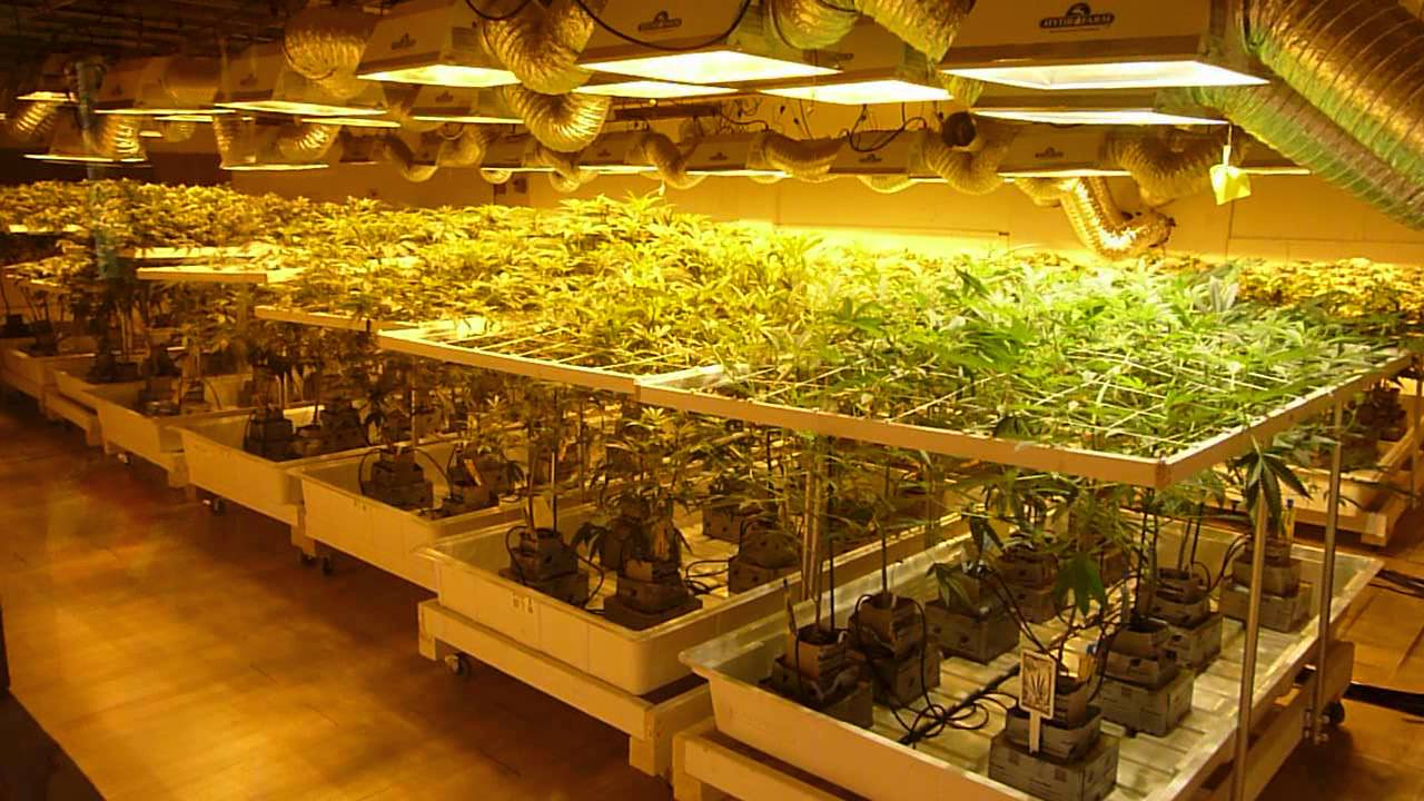 Image result for marijuana production facility
