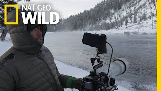 Behind the Scenes: Waiting for Bobcats | Wild Yellowstone