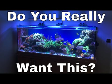 Do You Really Want A Saltwater Tank?