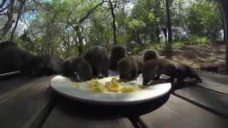Mongoose babies at Pondoro Game Lodge