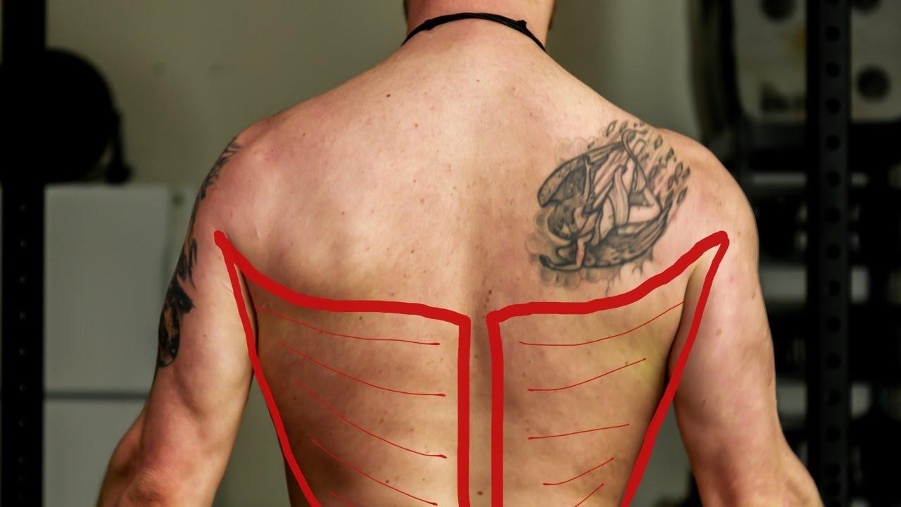Gym Muscle Anatomy: Latissimus Dorsi - YouTube