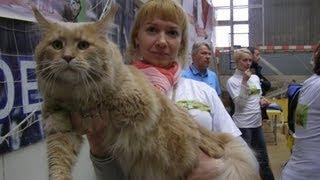 Чемпионат породистых кошек в Киеве