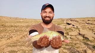 Fish hunting lamdorr ka shikar mangla dam ka khubsurat shikar fishing 2021