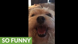 Puppy is a huge fan of her owner's singing skills