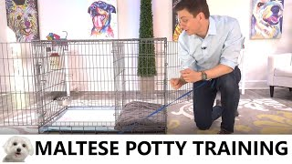 Maltese Potty Training from WorldFamous Dog Trainer Zak George  How to Potty Train a Maltese Puppy