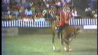 Darrel Wallen And Mr. Rythm - World's Greatest Exhibition Horse !