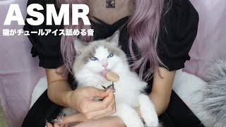 【ASMR】猫がチュールアイス舐める音