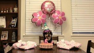 Amber's 5th Birthday (4.16.2015 - Day 132)