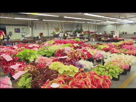 Hawaii Grown, Hawaii Made: Green Point Nurseries