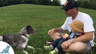Dog Bite Prevention For Kids - Professional Dog Training Tips