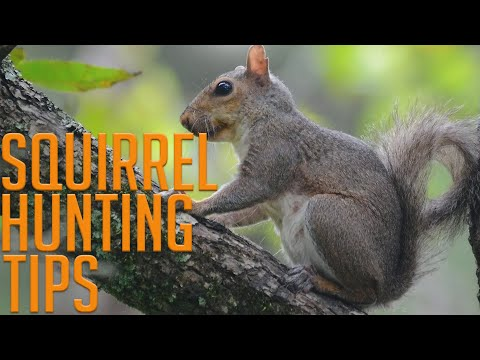 Four Squirrel Hunting Tips!
