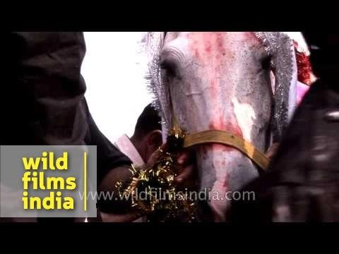 Horse decorated for Muharram procession - Delhi