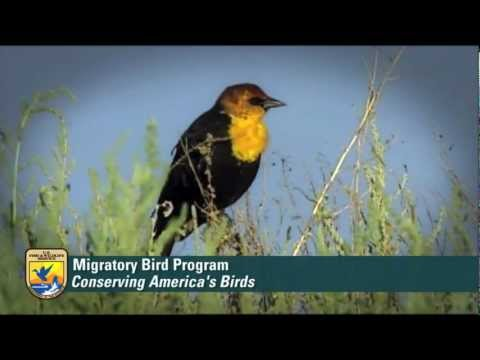 USFWS Division of Migratory Birds Overview
