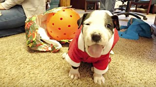 RESCUE DOGS FIRST CHRISTMAS video Invites His Friends: Try Not To Cry