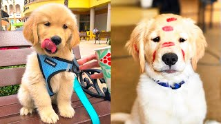 Baby Dogs - Cute and Funny Dog Videos Compilation #15 | Aww Animals